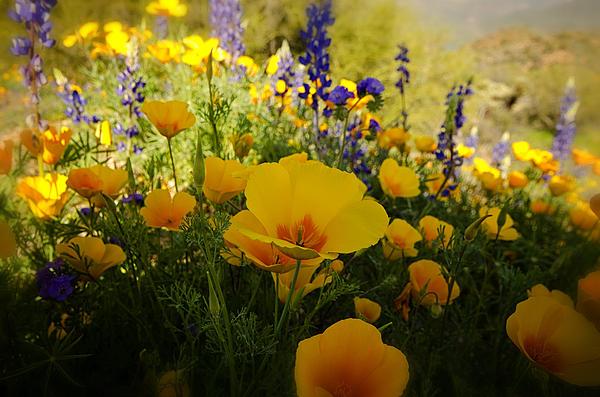 Saija  Lehtonen - Spring Wildflowers