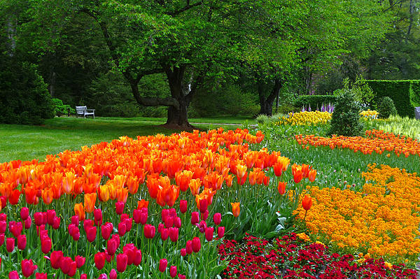 Springtime At Longwood Gardens Print by Dan Myers