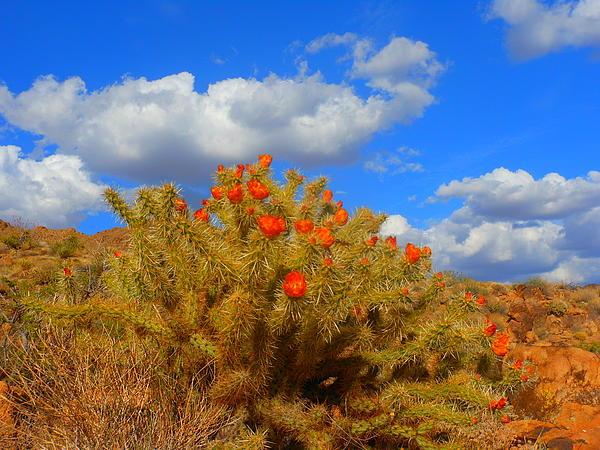 Springtime In Arizona Print by James Welch