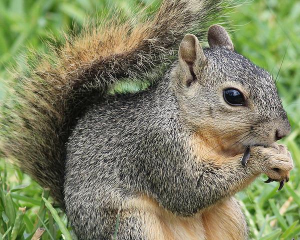 Tessa Fairey - Squirrel Thief