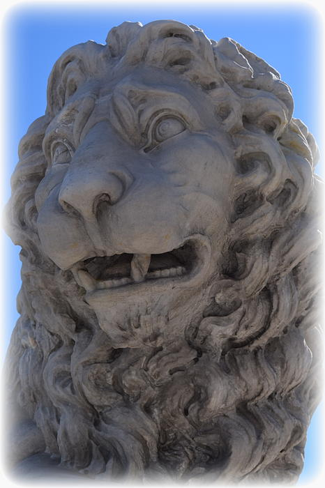 St. Augustine Lion 1 Print by Sheri McLeroy