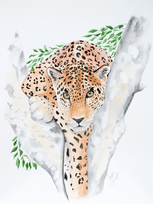 Stalker In The Trees Print by Joette Snyder