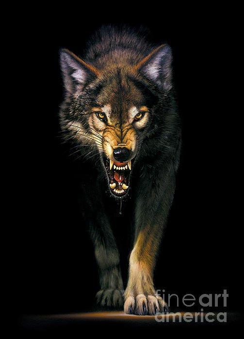 Stalking Wolf Print by MGL Studio - Chris Hiett