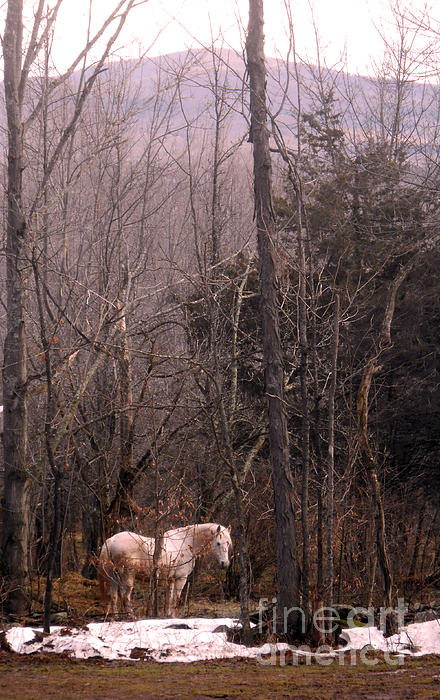 Stallion In The Mountain Pasture Print by Patricia Keller