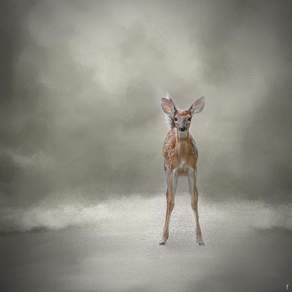 Jai Johnson - Stand Strong Little Fawn - Deer - Wildlife