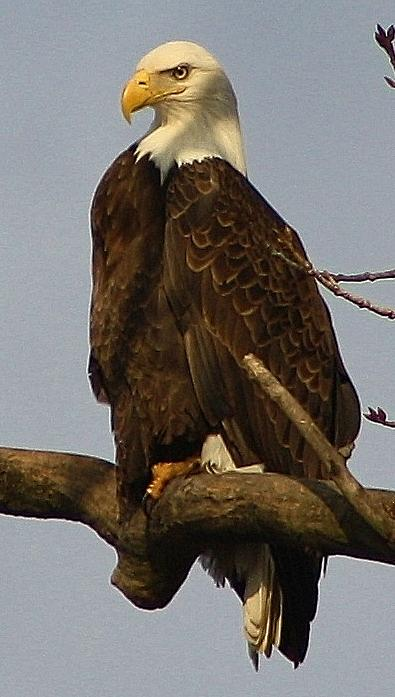 Standing Watch Print by Bruce Bley