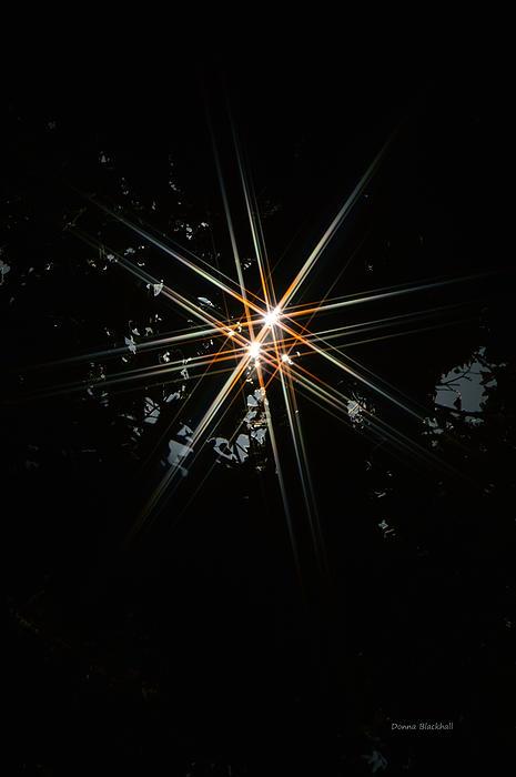 Star Bright Print by Donna Blackhall