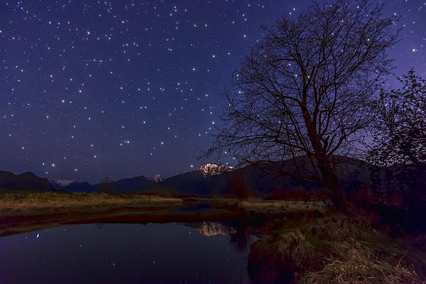 Star Light Star Bright Print by James Wheeler