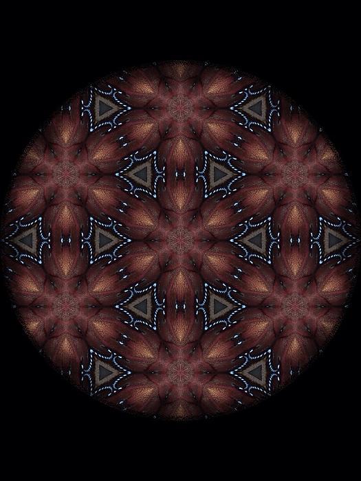 Star Octopus Mandala Print by Karen Buford