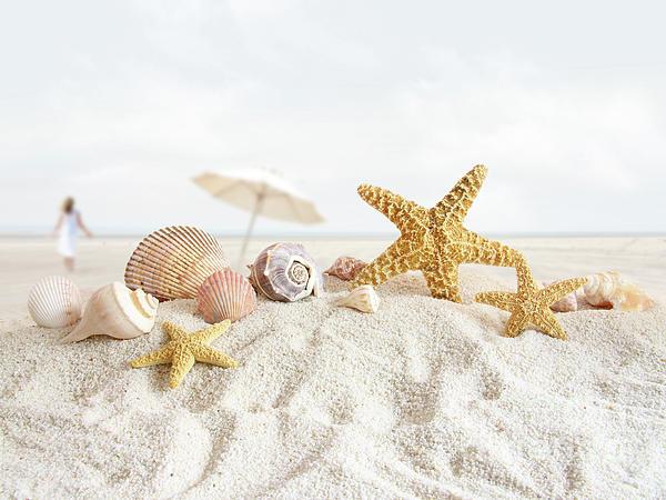 Starfish And Seashells  At The Beach Print by Sandra Cunningham