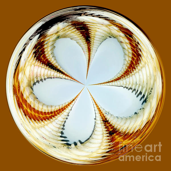 Starfish To Flower - Orb Print by Kaye Menner
