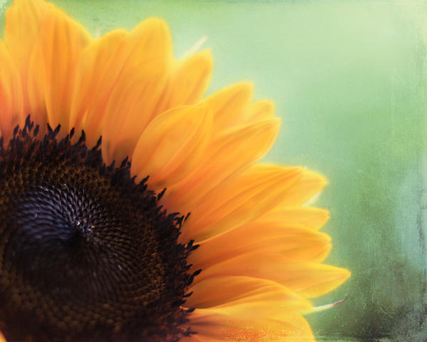 Staring Into The Sun Print by Amy Tyler
