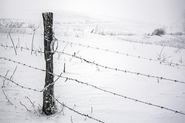 Stark Realities Of Winter Print by John Haldane