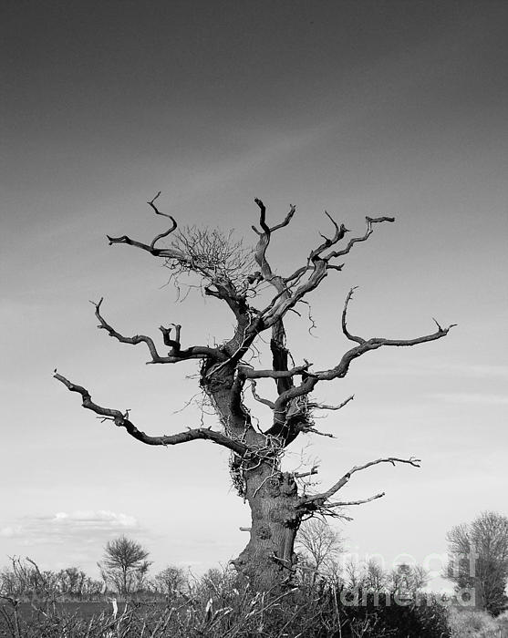Stark Tree Print by Pixel Chimp