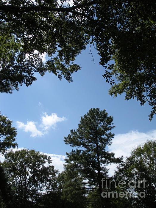 Joseph Baril - Stately Forest