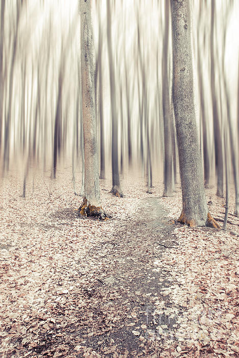 Steppin' Through The Last Days Of Autumn Print by Hannes Cmarits