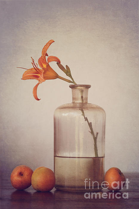 Still Life With Apricots Print by Diana Kraleva