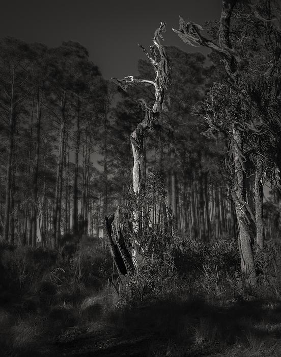 Still Standing Print by Mario Celzner