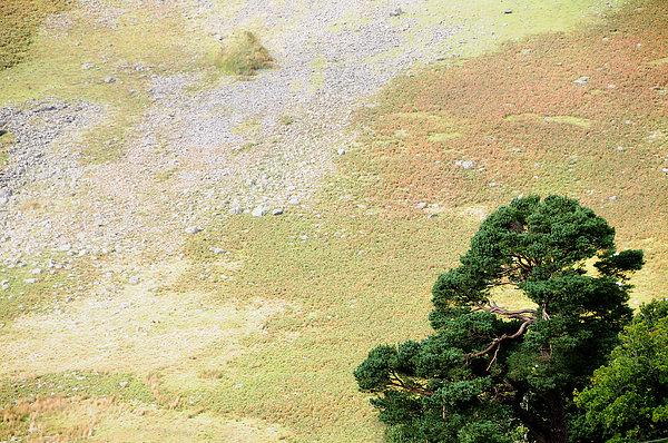 Stillness. Wicklow Mountains. Ireland Print by Jenny Rainbow