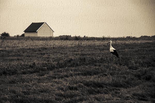 Stork's Tale Print by Yevgeni Kacnelson