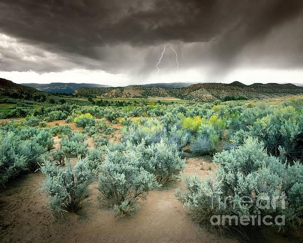 Storms Never Last Print by Edmund Nagele