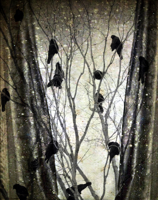 Gothicolors Donna Snyder - Stormy Winter Window