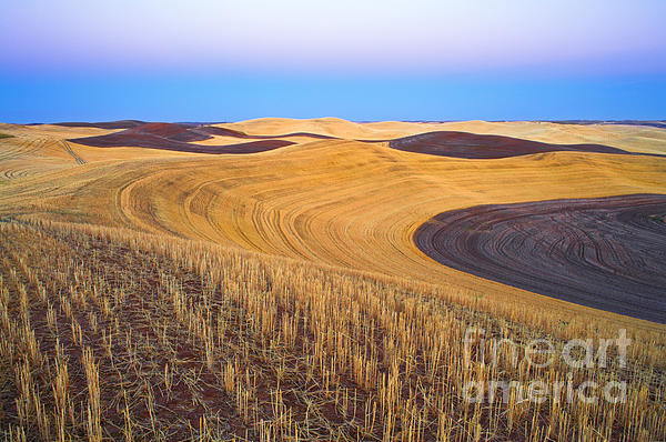Stubble Print by Don Hall