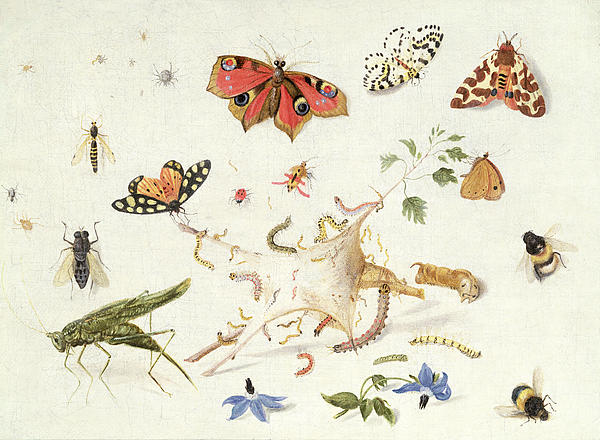 Study Of Insects And Flowers Print by Ferdinand van Kessel