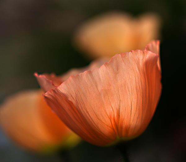 Joe Schofield - Suenos de Flores