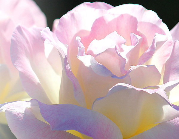 The Art Of Marilyn Ridoutt-Greene - Summer Afternoon