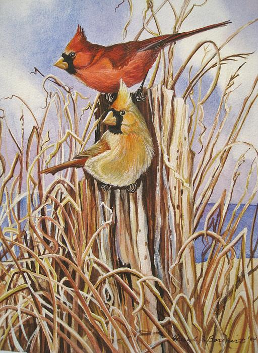 Summer Cardinals Print by Cheryl Borchert