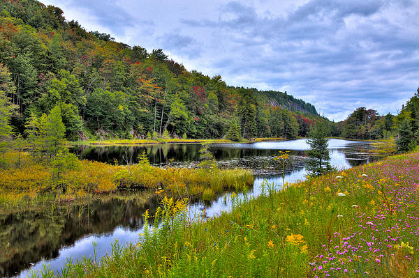 David Patterson - Summer Flowers at Bald Mountain Pond