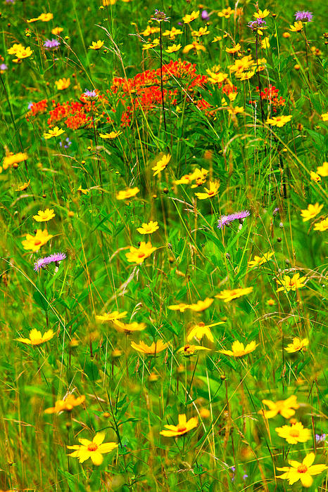 Summer Flowers On The Blue Ridge Parkway I Print by Dan Carmichael