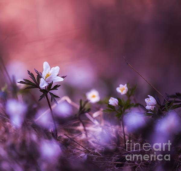 Summer Glimpse Print by Rose-Maries Pictures