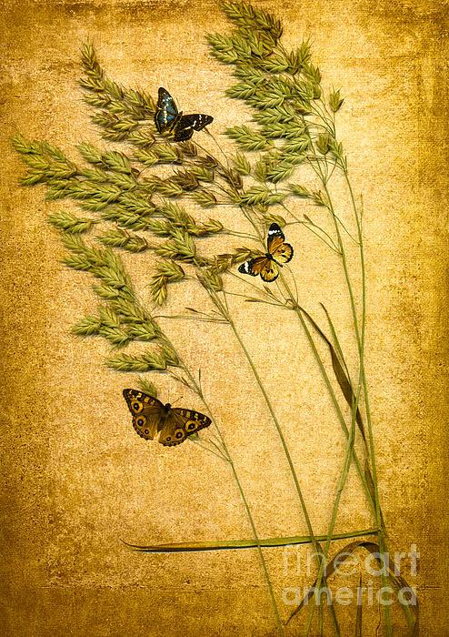 Jan Bickerton - Summer Meadow