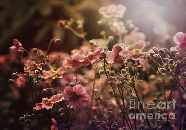 Elaine Manley - Summer Sonnet