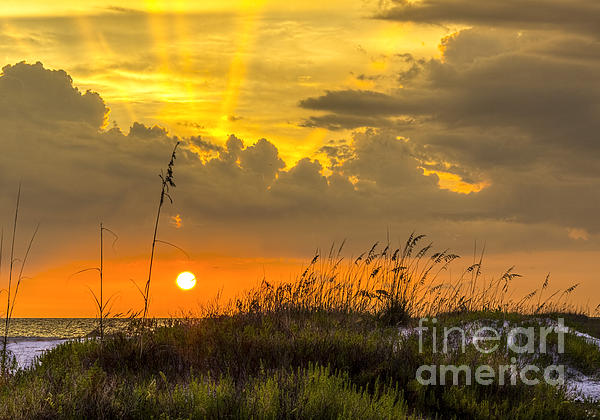 Summer Sun Print by Marvin Spates