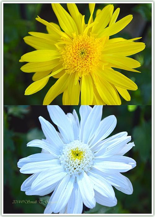 Sonali Gangane - Sun and Moon flowers