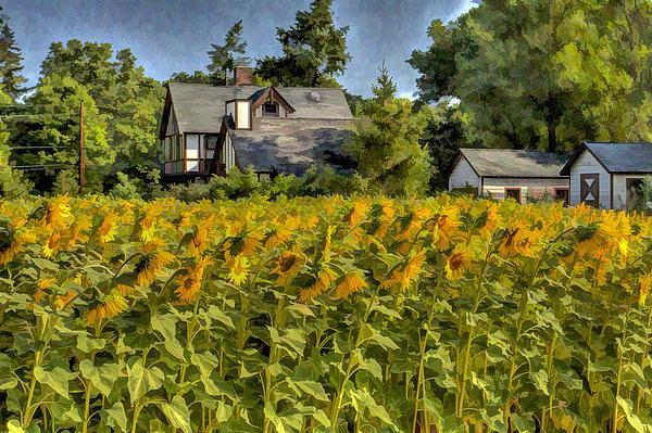 Geraldine Scull ART - Sun flower field oil painting