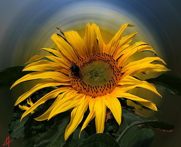 Colette V Hera  Guggenheim  - Sun Flower Summer 2014