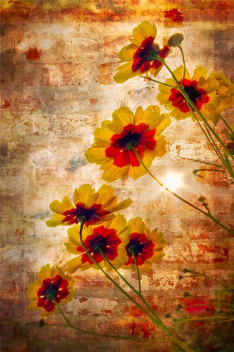 Sun Seekers Print by Debra and Dave Vanderlaan
