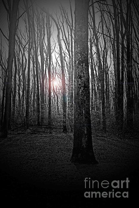 Tom Gari Gallery-Three-Photography - Sun Thru The Trees At Twilight