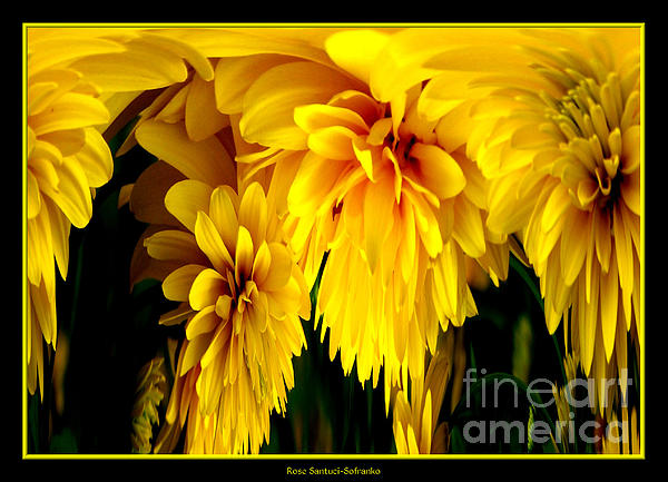 Sunflower Abstract 1 Print by Rose Santuci-Sofranko