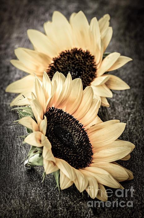 Sunflower Blossoms Print by Elena Elisseeva