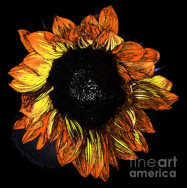 Mitch Shindelbower - Sunflower Fresco