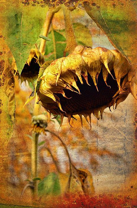 Sunflower Print by Gynt
