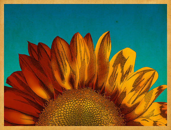 Meg Shearer - Sunflower