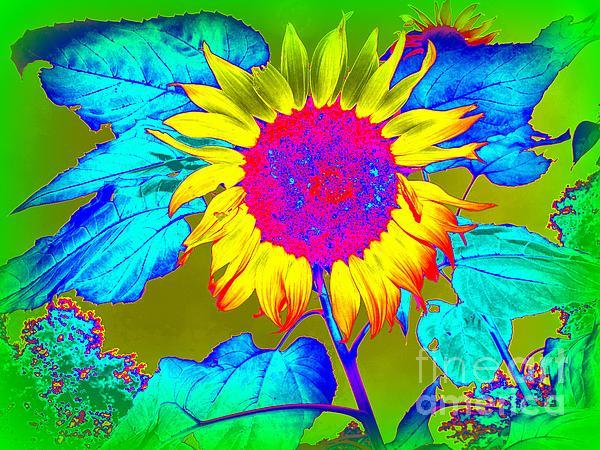Sunflower Pop Print by Ed Weidman