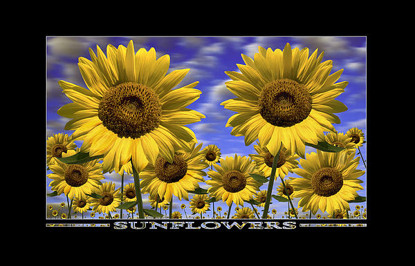 Sunflowers Print by Mike McGlothlen