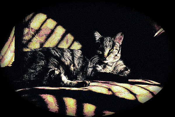 Sunlight And Whiskers Print by Ronald Hurst
